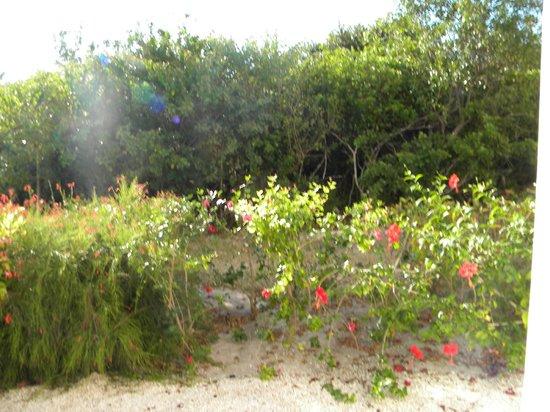 Hotel Playa Cayo Santa Maria : La vue de notre chambre