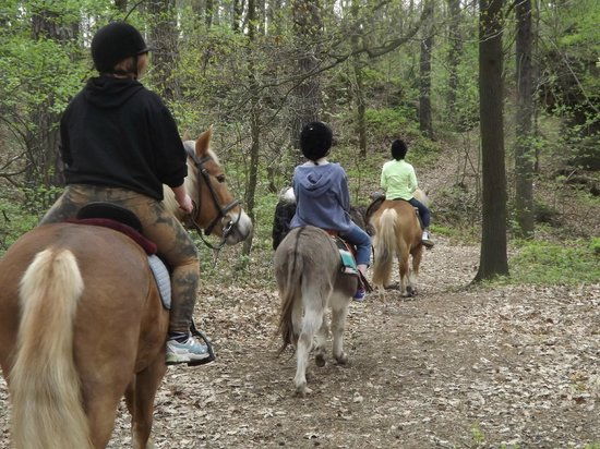 The Blue Beetroot Hotel : trail riding on the grounds