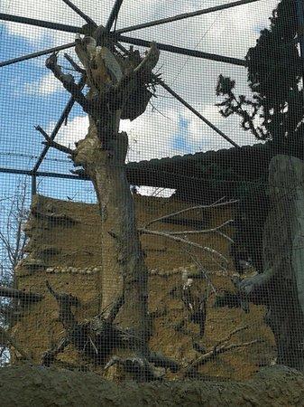 Centro de Fauna José Peñas