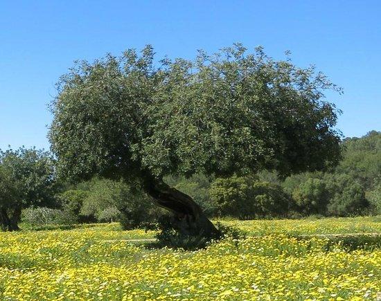 Son Sama Finca: Baum auf blühender Wiese der Finca.