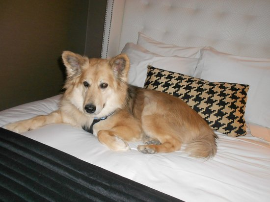 The Bentley Hotel: Yurtie enjoying the super comfy bed at the Bentley