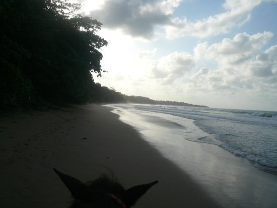 Caribe Horse Riding Club: A beach all to ourselves