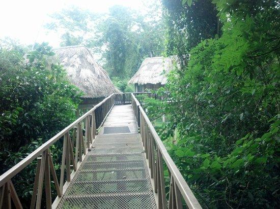Pook's Hill Lodge: Walkway to birdwalk cabanas
