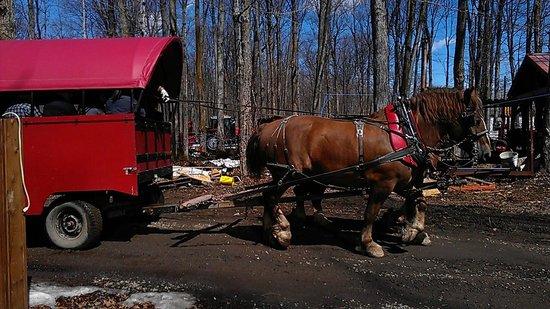 Chalet des Erables : Horse carriage ride