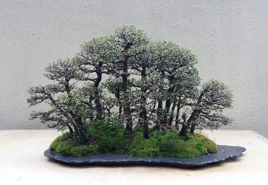 Pacific Bonsai Museum Federal Way 2021 All You Need To Know Before You Go With Photos Tripadvisor