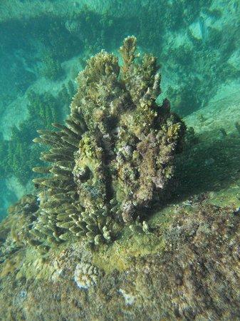 Anse Royale beach: Spiaggia Anse Royale