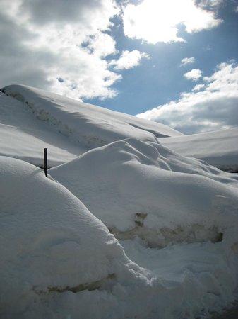 Parco Paneveggio - Pale di San Martino: centro visitatori nella neve!