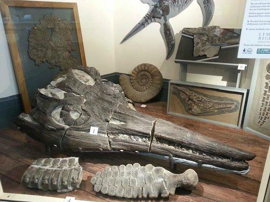 Lyme Regis Philpot Museum: Museum Display