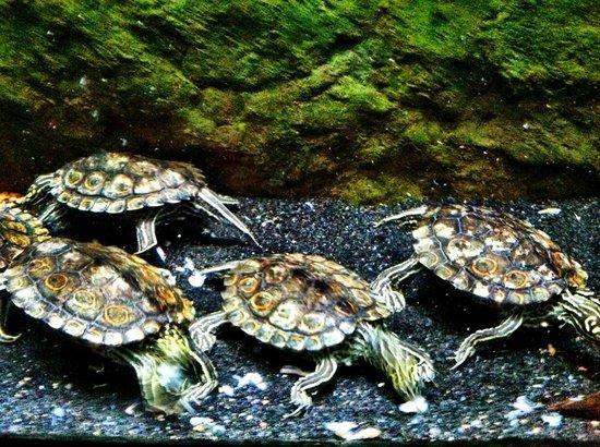 Shedd Aquarium: Turtles! They swim! They eat!