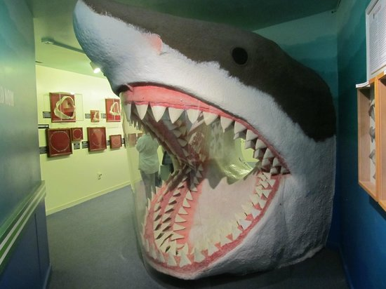 Aurora Fossil Museum: Get a picture with the Shark
