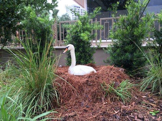 Lake Eola Park : City Swan Nest