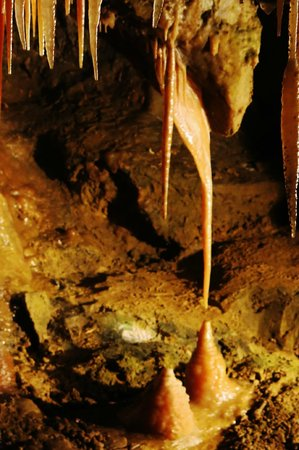 Treak Cliff Cavern: The Stork stalagmite and tite