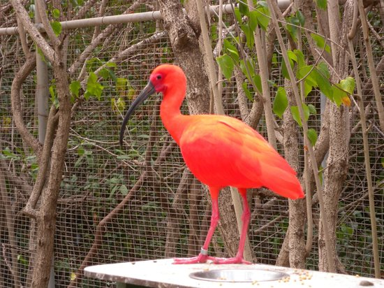 St. Maarten Zoo : What a colour!