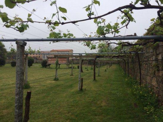 Bodegas del Palacio de Fefinanes: Vid en la hectárea del palacio