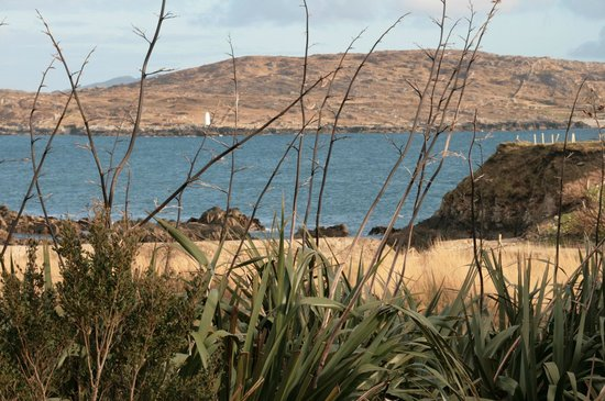 Dolphin Beach House : Ocean View