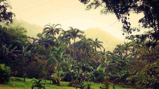 La Gavilana Herbs and Art: View of Finca Artesana, one of La Gavilana's Forest Adventure tours