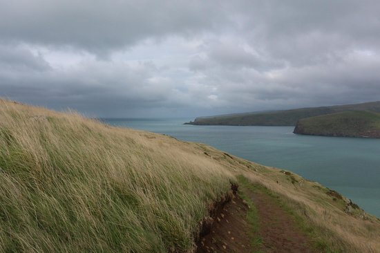 Godley Head: View out over Lyttleton Heads