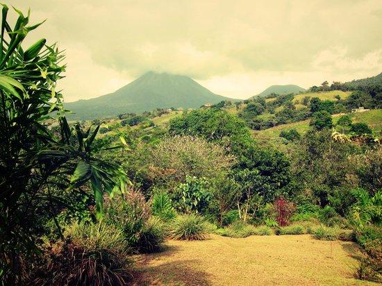 La Gavilana Herbs and Art: View from Diosa Verde's 'food forest' right next to La Gavilana