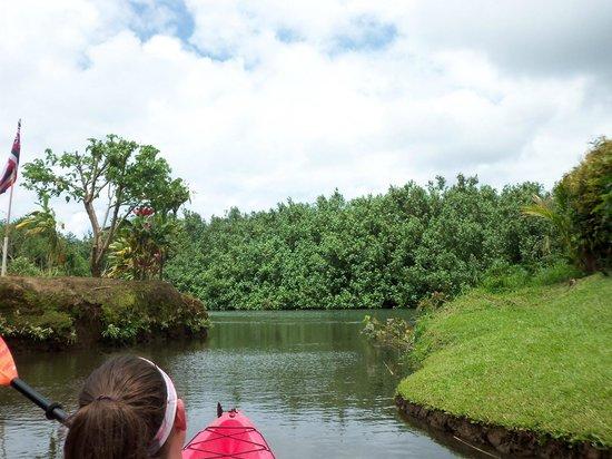 Kayak Hanalei: The river again