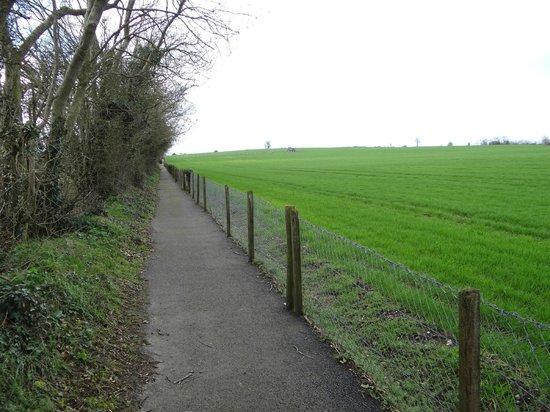 Brownshill Dolmen : Path to Dolmen (in center of photo); 8-10 min walk