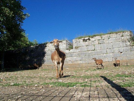 La Citadelle de Besançon: Random pic at the zoo