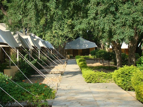 Samode Bagh: Tents