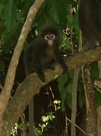 The Andaman, A Luxury Collection Resort : Cute baby monkey at the beach