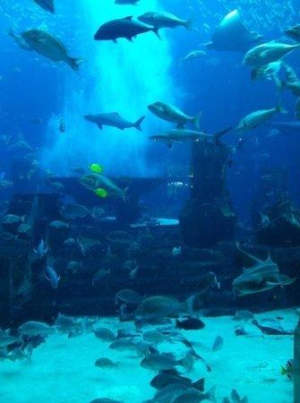 Atlantis, The Palm: Аквариум с акулами