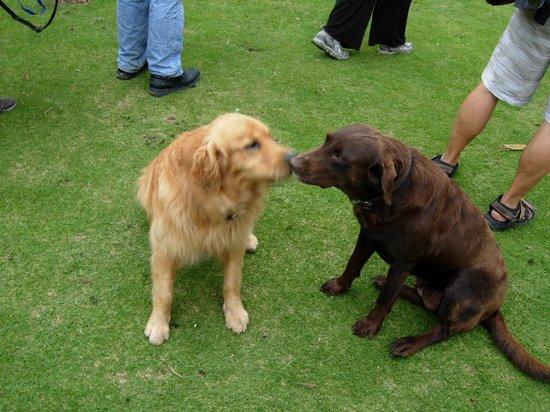 Hacienda Manteles: Doggies