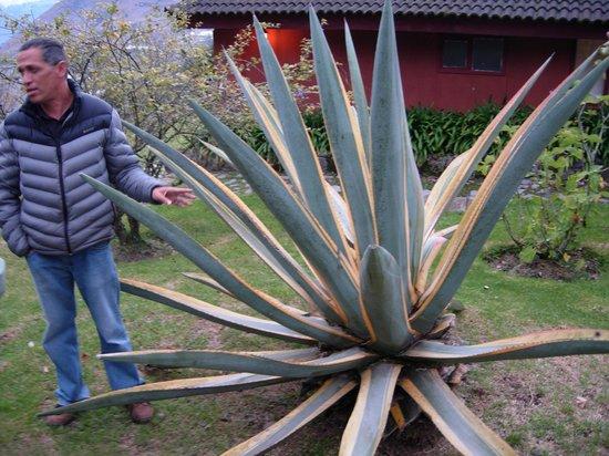 Hacienda Manteles: Fernando and his garden