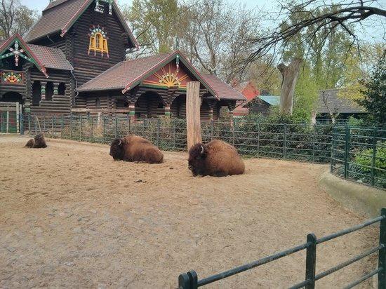 Tierpark: 6