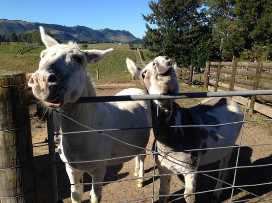 Doolan's Country Retreat: Hungry Mules!