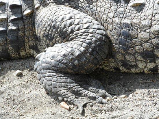 Los Lagos Hotel Spa & Resort: Crocodile viewing