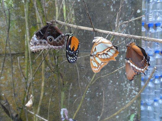 Los Lagos Hotel Spa & Resort: Butterfly Farm
