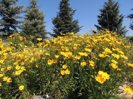 Yampa River Botanic Park Small Field Of Flowers