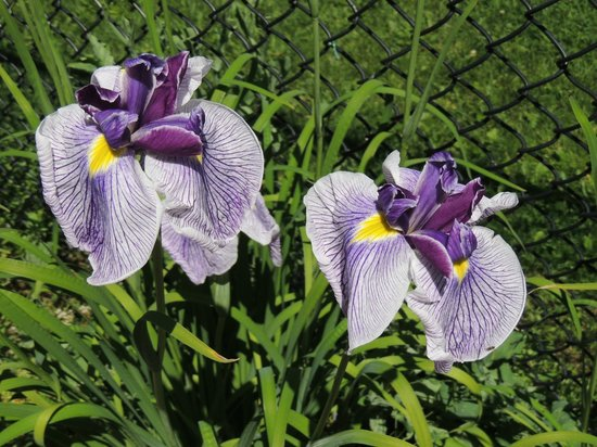Yampa River Botanic Park: More flowers at the park