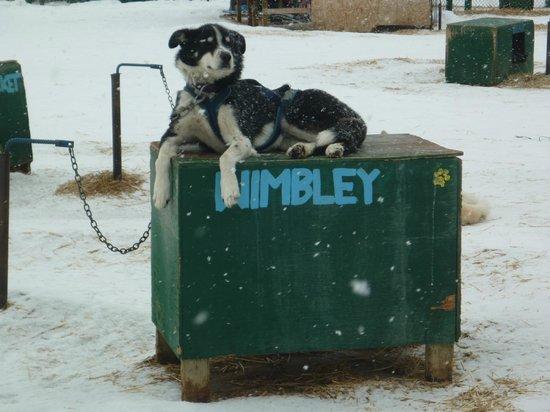 Muktuk Adventures: Wimbley
