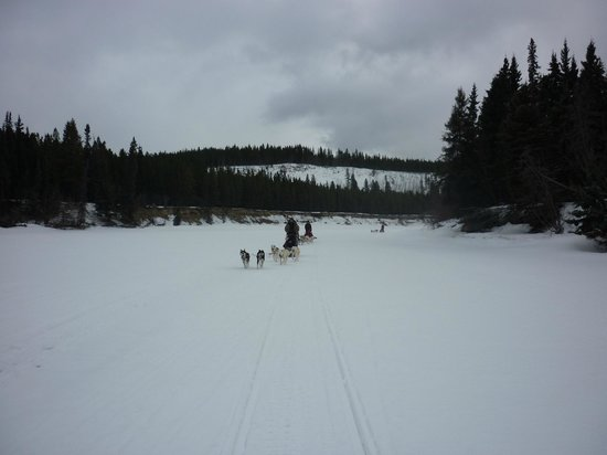 Muktuk Adventures: dog sledding