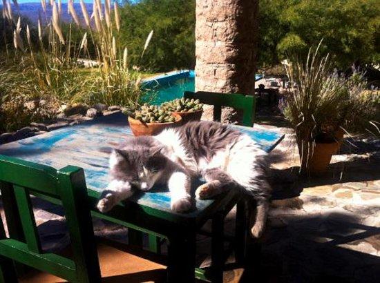 La Paya: Cat lounging near pool