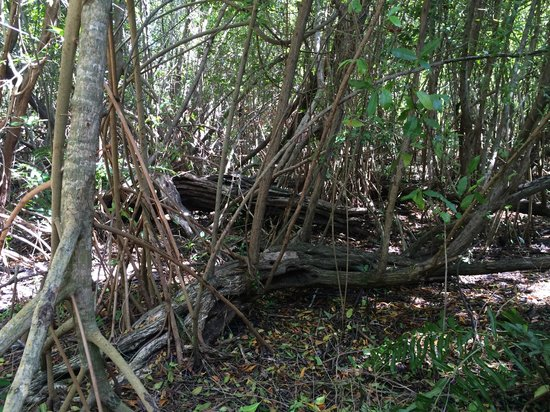Sandos Caracol Eco Resort: Mangroves