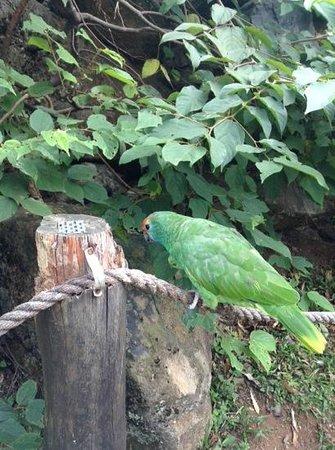 GramadoZoo : Posing Parrot