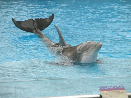 Texas State Aquarium: Dolphin show at the Corpus Christi Aquarium