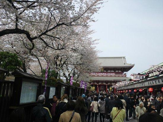 Senso-ji Temple: 桜