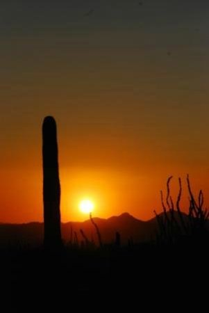 Arizona-Sonora Desert Museum : Desert Sunset
