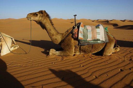 Hotel Kasbah Sahara Services : Camel for tour
