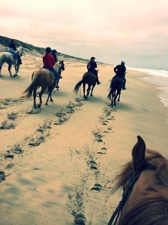 Monterey Bay Equestrian Center: April (spring break) ride along the Molera (state park) beach