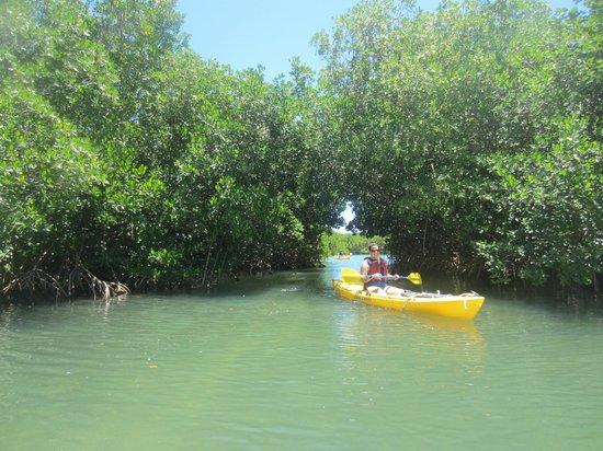 Virgin Islands Ecotours: Through the mangrove tunnel