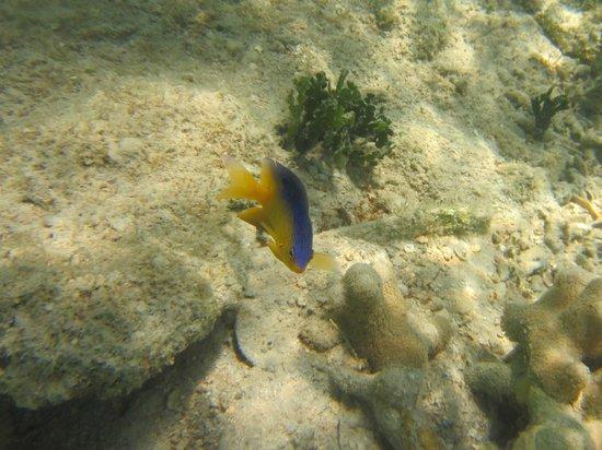 Virgin Islands Ecotours: Damselfish