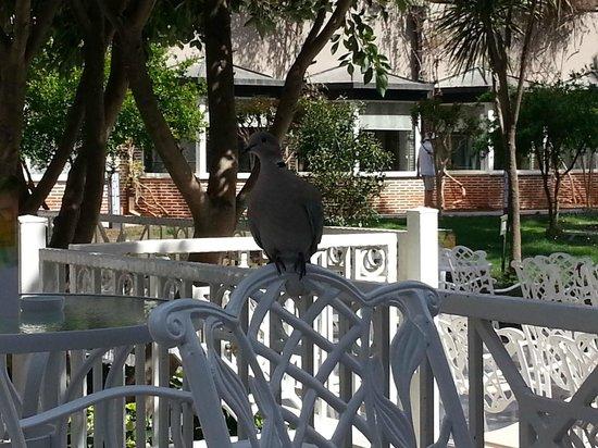 Papillon Ayscha Hotel: Птичко