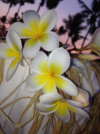 Andilana Beach Resort : I magnifici fiori che trovi in giardino ��